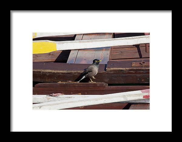 Yarkon Park Framed Print featuring the photograph Bird On Boat by Daniel Blatt