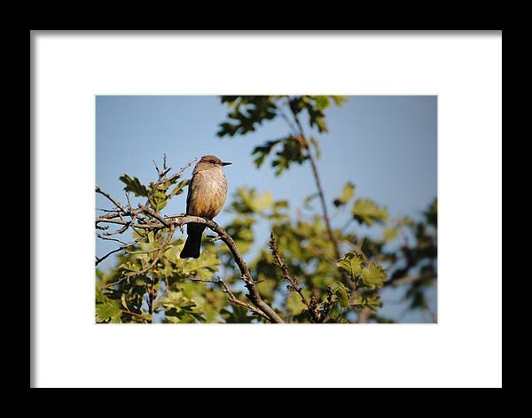 Animal Framed Print featuring the pyrography Bird On Branch by Chase Hall