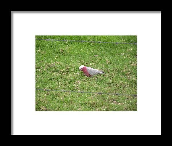 Bird Framed Print featuring the photograph Bird by Rani De Leeuw