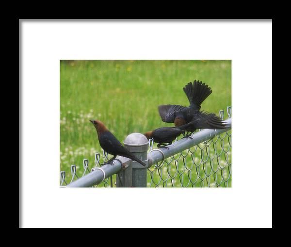 Black Birds Framed Print featuring the photograph Bird Trio by Martha Abell