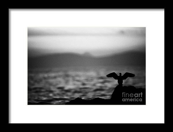 County Framed Print featuring the photograph Bird Wings Irish Rocky Coastline by Joe Fox