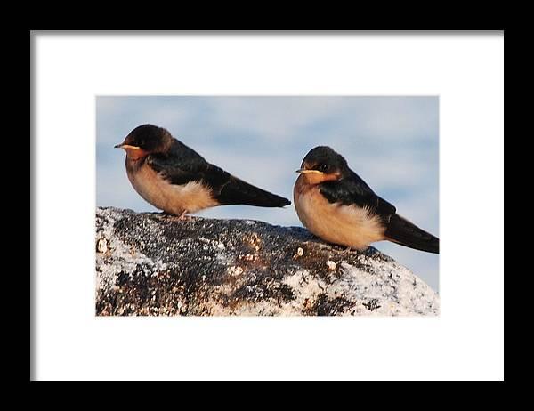 Birds Framed Print featuring the photograph Birding by Paulina Roybal
