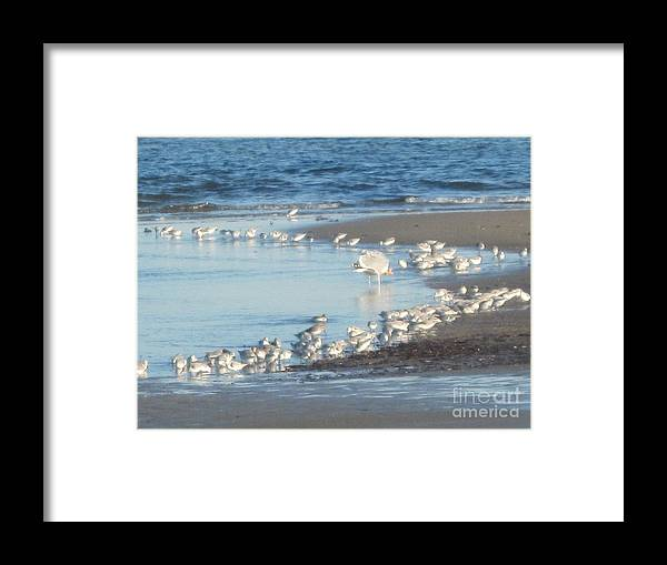 Birds Framed Print featuring the photograph Birds And One Lone Seagull. by Barbara Milhender