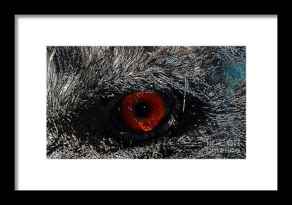 Bird's Eye Framed Print featuring the photograph Bird's Eye by Methune Hively