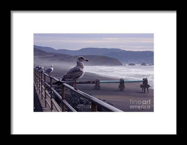 Birds Framed Print featuring the photograph Birds On A Rail II by Polly Villatuya