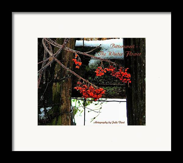 Bittersweet Framed Print featuring the photograph Bittersweet The Winter Flower by Julie Dant