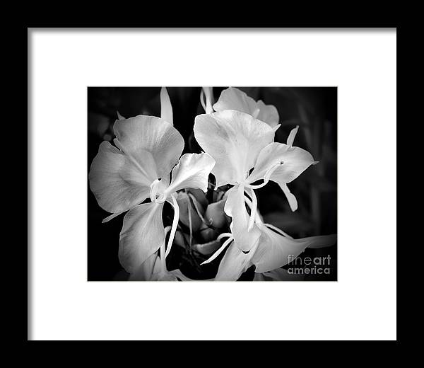 Botanical Framed Print featuring the photograph Black And White Hawaiian Ginger Flowers by Eva Thomas