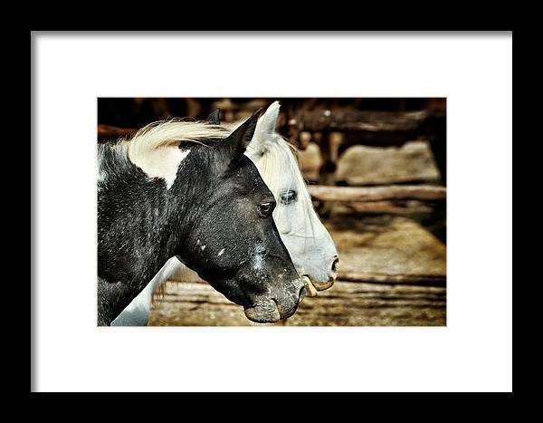 Horse Framed Print featuring the photograph Black And White by Zoran Buletic