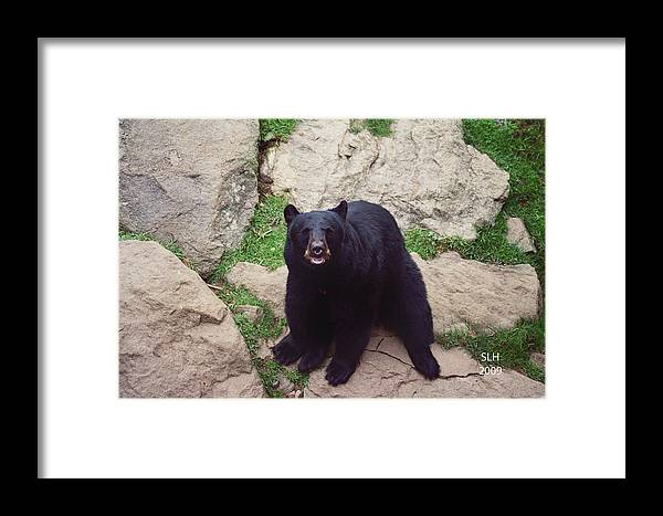 Lee Framed Print featuring the photograph Black Bear by Lee Hartsell