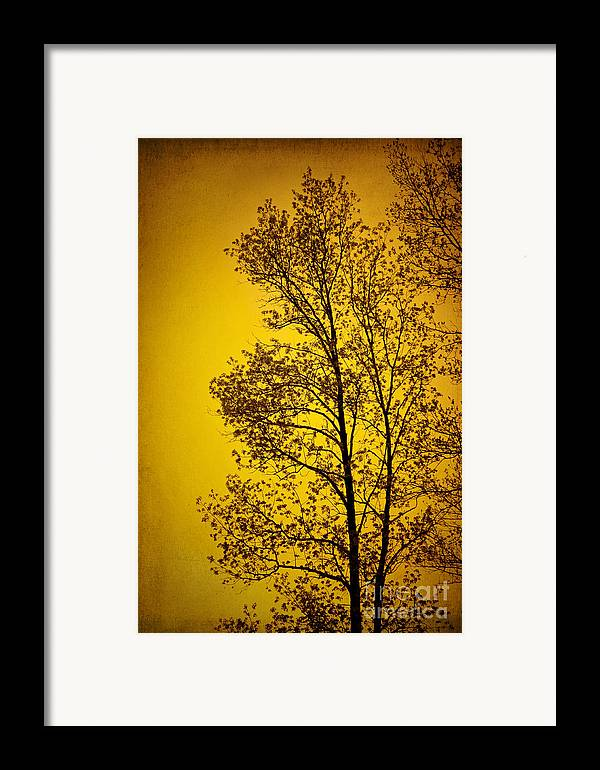 Sunset Framed Print featuring the photograph Blazing Sunset by Cheryl Davis