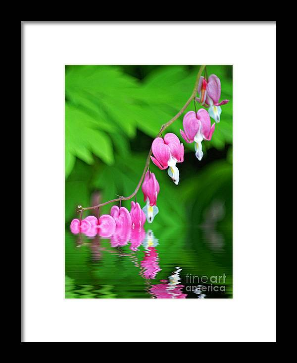 Flowers Framed Print featuring the photograph Bleeding Hearts Drowning by Dawn Harris