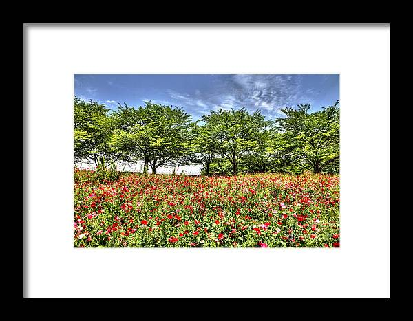 Hdr Framed Print featuring the photograph Bloomed Poppy by Tad Kanazaki