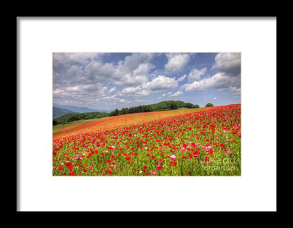 Nature Framed Print featuring the photograph Blooming In The Plateau by Tad Kanazaki