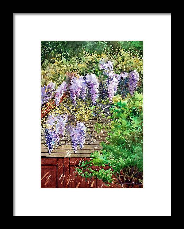 Peter Sit Watercolor Framed Print featuring the painting Blooming Wisteria by Peter Sit