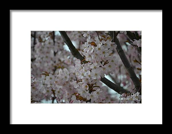 Blossom Framed Print featuring the photograph Blossom by Art Kleisen