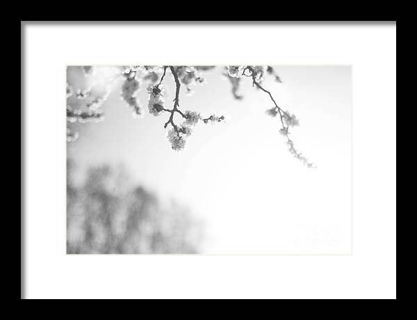 Spring Framed Print featuring the photograph Blossom by Erin Hensley