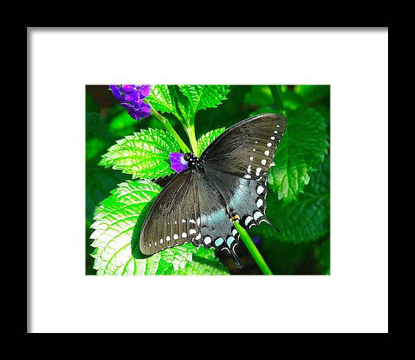 Framed Print featuring the photograph Blue Beauty by Dawn Santos