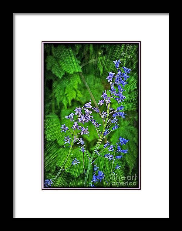 Flowers Framed Print featuring the photograph Blue Bells by Dawn Harris