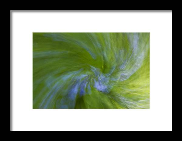 Bluebell Framed Print featuring the photograph Blue Bells Vortex 1 by John Brueske