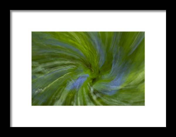 Bluebell Framed Print featuring the photograph Blue Bells Vortex 4 by John Brueske