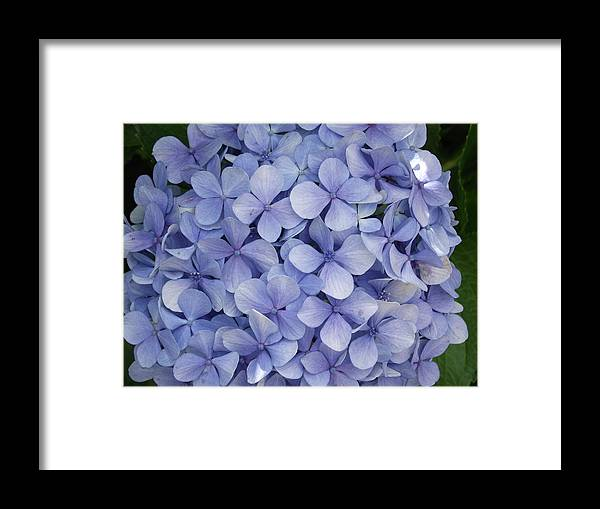 Blue Framed Print featuring the photograph Blue Cluster by Rani De Leeuw