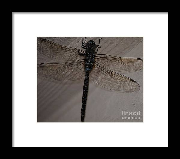 Dragonfly Framed Print featuring the photograph Blue Dragonfly by Paulina Roybal