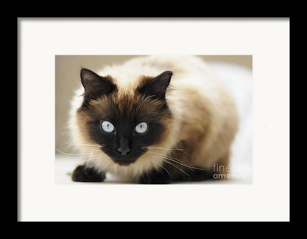 England Framed Print featuring the photograph Blue Eyes by Andrew Michael
