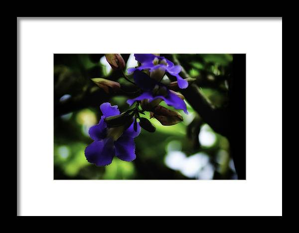 Blue Framed Print featuring the photograph Blue Flower In Tree by Charles Garrett