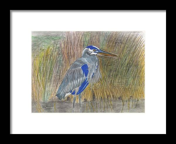 Bird Framed Print featuring the drawing Blue Heron by Don Gallacher