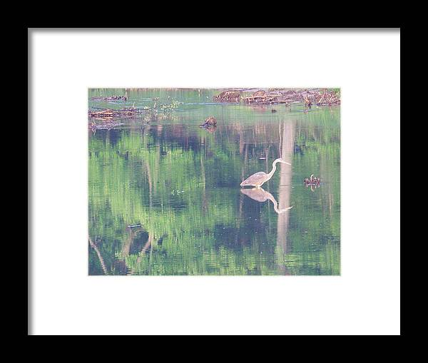 Reflections Framed Print featuring the photograph Blue Heron6 by Martha Abell