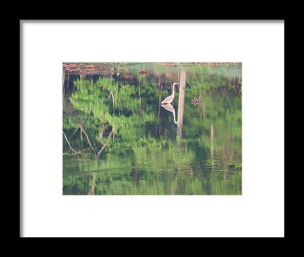 Reflections Framed Print featuring the photograph Blue Heron8 by Martha Abell