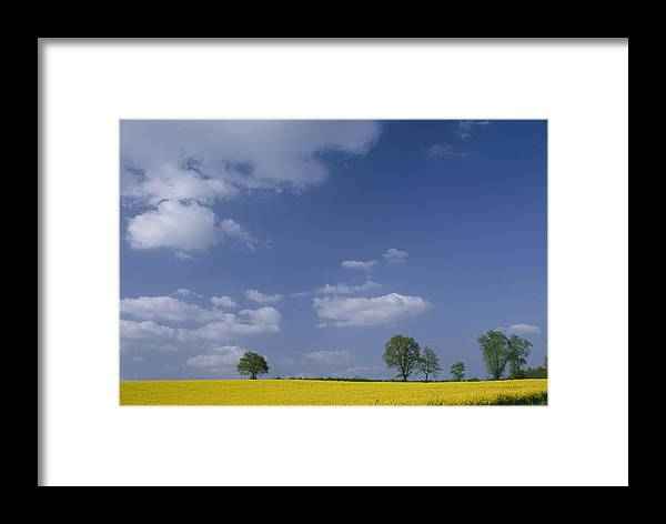 Sky Framed Print featuring the photograph Blue Sky Covers A Yellow Field by Todd Gipstein