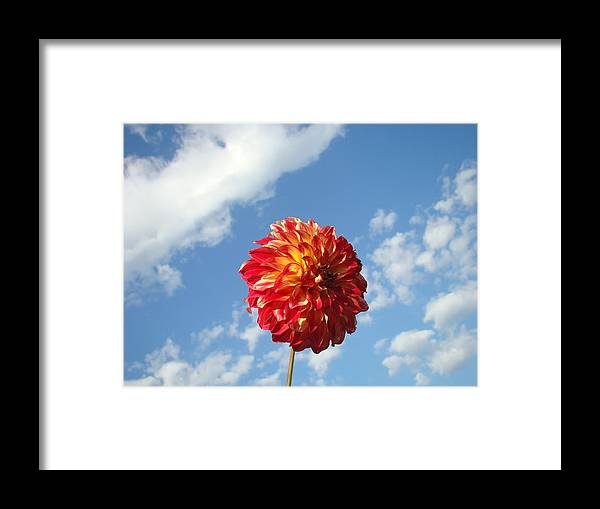 Flowers Framed Print featuring the photograph Blue Sky Nature Art Prinst Red Dahlia Flower by Baslee Troutman