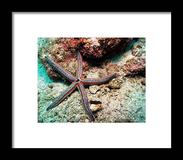 Framed Print featuring the photograph Blue Star by Richard Morris