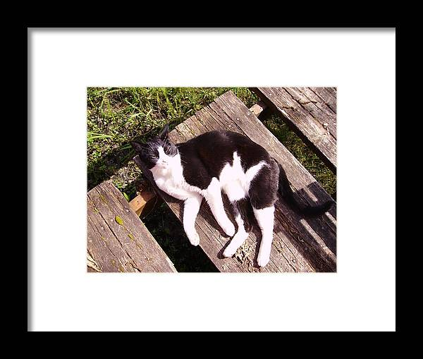 Cat Framed Print featuring the photograph Board On A Sunny Day by Naomi Rogers