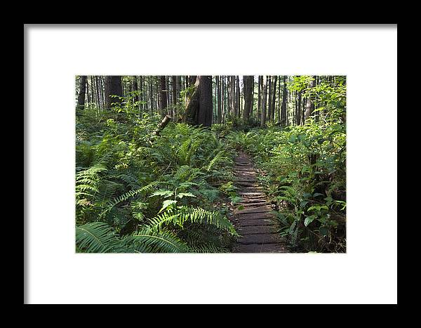 Mp Framed Print featuring the photograph Boardwalk Winds Through The Forest by Konrad Wothe
