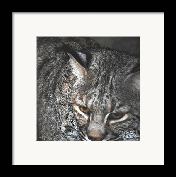 Bobcat Framed Print featuring the photograph Bobcat Love by DiDi Higginbotham