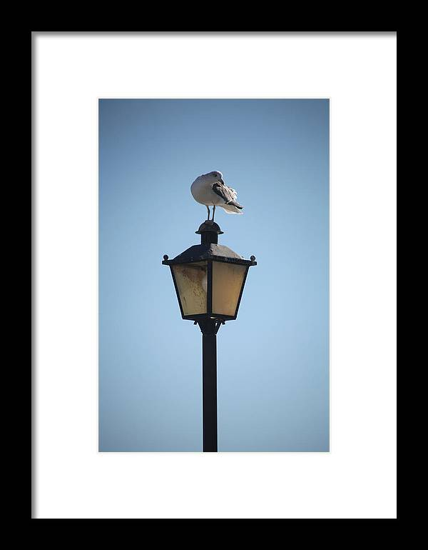 Jezcself Framed Print featuring the photograph Boid Rest by Jez C Self