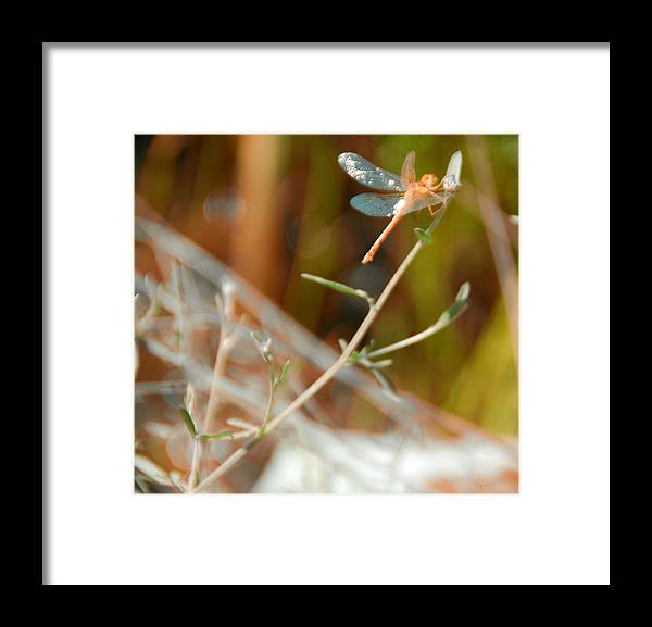 Bokeh Framed Print featuring the photograph Bokeh And Some by Chris Hartman Price