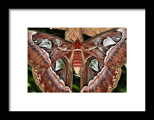 Butterfly Framed Print featuring the photograph Born Again by Melody Gleichman