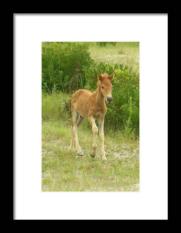 Pony Framed Print featuring the photograph Born To Be Wild 2 by Sven Migot