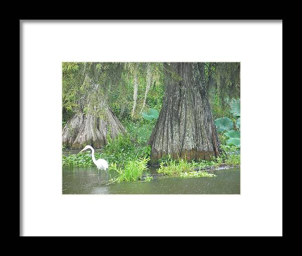 Alligator Framed Print featuring the photograph Bow Legged Egret by Larry Eddy