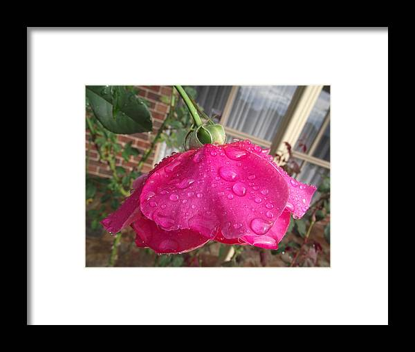Flower Framed Print featuring the photograph Bowing Down by Rani De Leeuw
