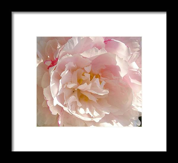 Peony Framed Print featuring the photograph Bowl Of Petals by Cathy Sosnowski