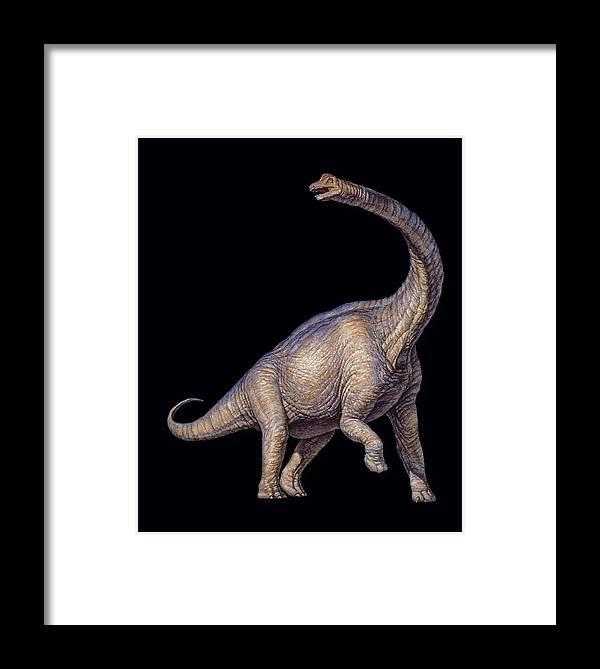 Brachiosaurus Framed Print featuring the photograph Brachiosaurus Dinosaur by Joe Tucciarone