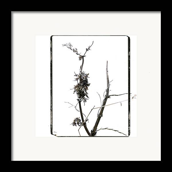 Worms-eye Framed Print featuring the photograph Branch Of Dried Out Flowers. by Bernard Jaubert