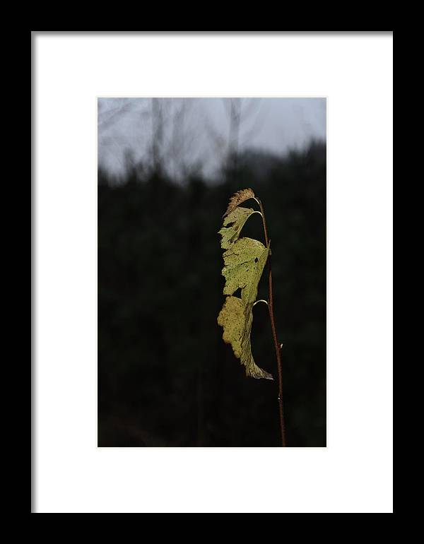 Autumn Framed Print featuring the photograph Branch Of Maple by Michael Goyberg