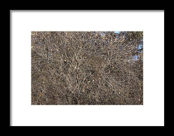 Branches Framed Print featuring the photograph Branches by Diego Re