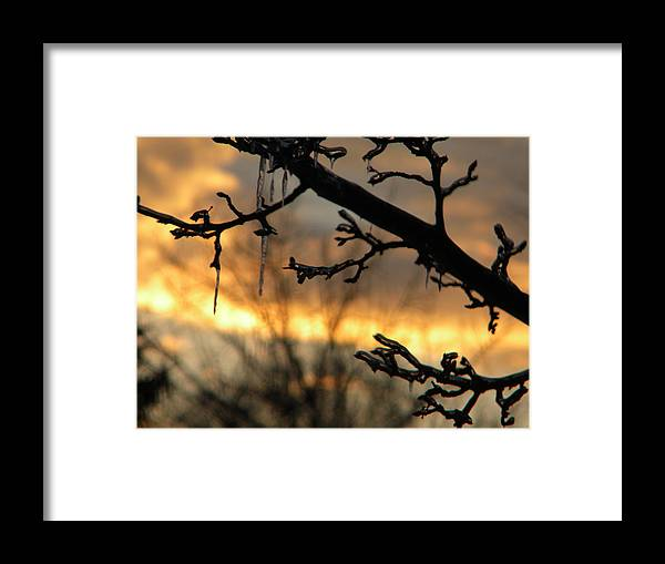 Sunset Framed Print featuring the photograph Branches in January by Helen ONeal