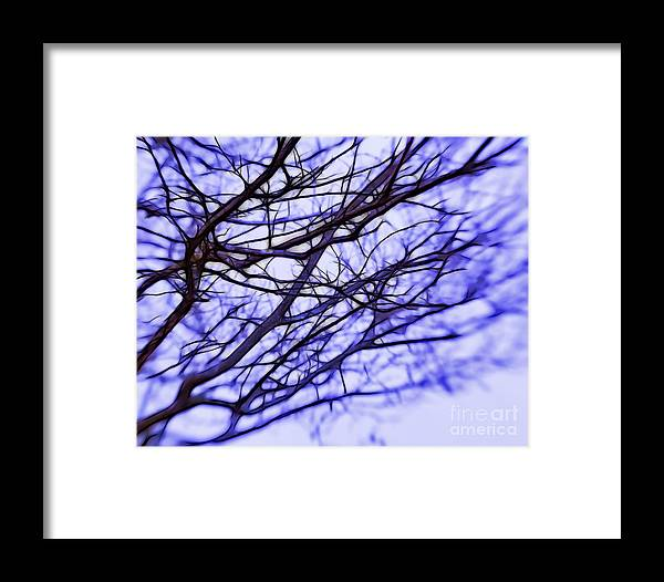 Branches Framed Print featuring the photograph Branches In Winter by Judi Bagwell